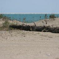 Sabbia del Lido di Venezia