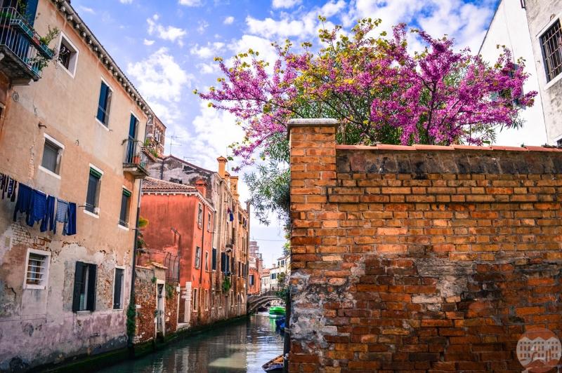 Primavera-veneziana