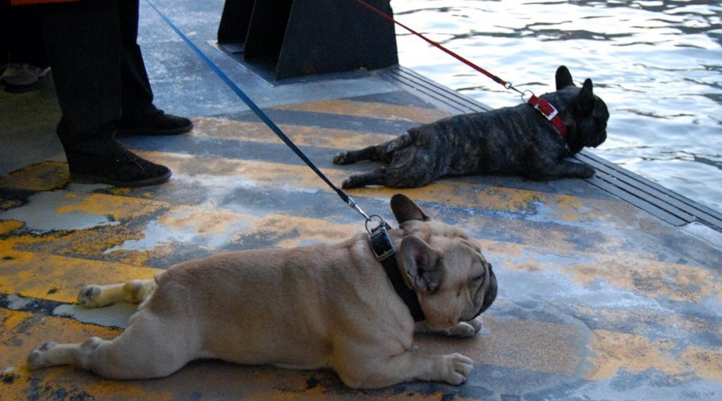 vaporetto col cane a venezia